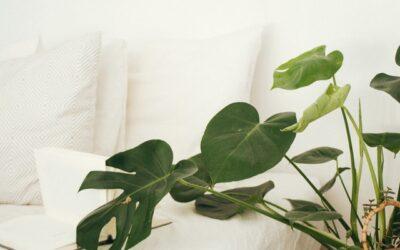 Zimmerpflanzen sind mehr als Dekoration